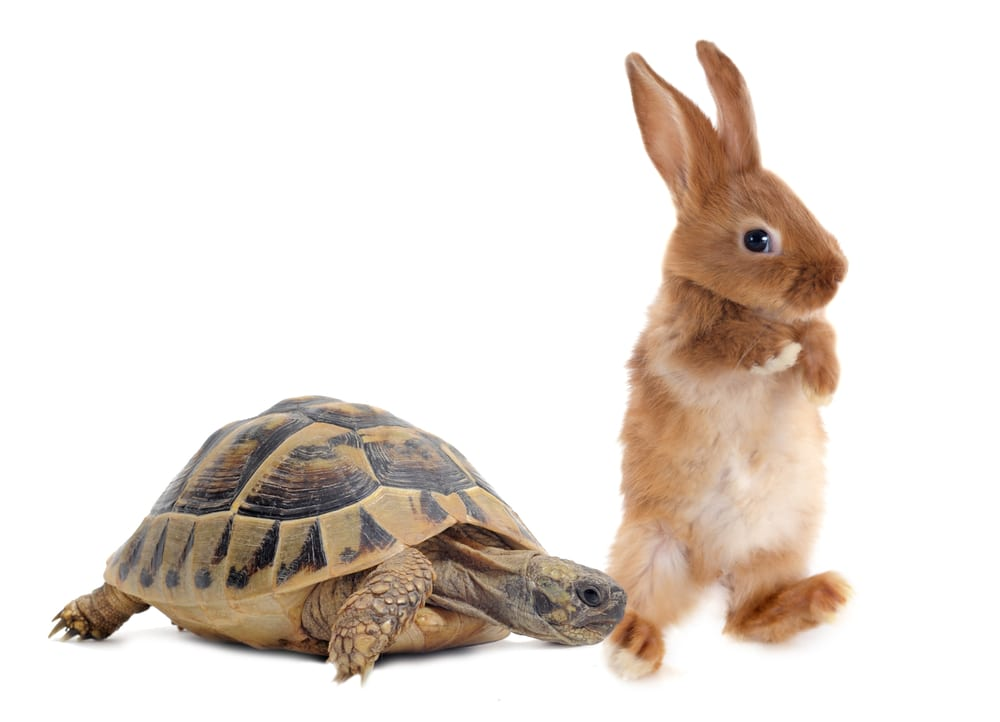 Photo of The Tortoise & the Hare: How Investors Can Avoid the Hot Hand Fallacy